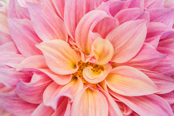 The-World-of-Flower-Photography-3