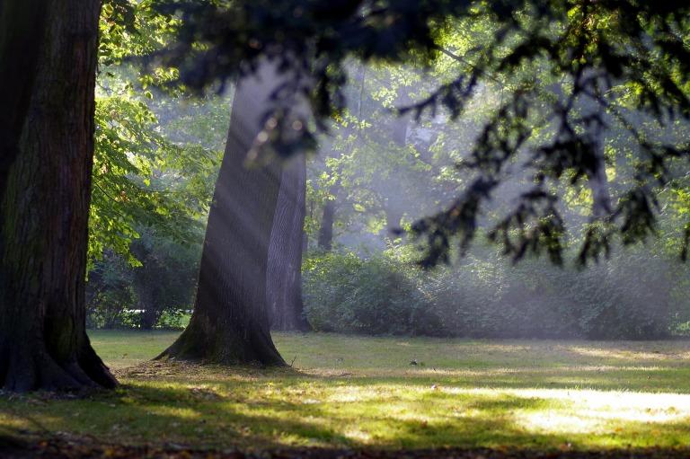 autumn-1694386_1920(1)