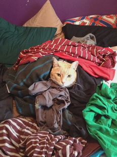 cat and clothes