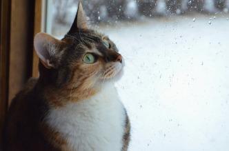 cat-2585514_1280